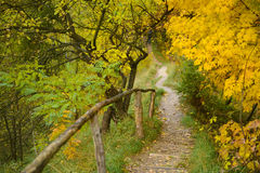 Golden Autumn in Lviv royalty free stock photos