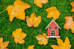 Golden autumn maple leaves and little wooden house. On green grass. Above view royalty free stock photo