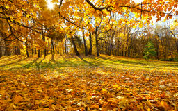 Golden autumn in Moscow royalty free stock images