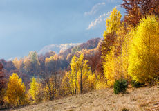 Golden autumn in mountain. Stock Images