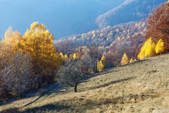 Golden autumn in mountain. Stock Photography