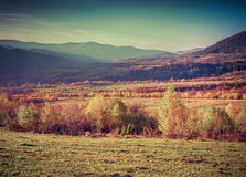 Golden autumn in the mountains. Royalty Free Stock Photography