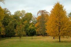 Golden autumn nature Royalty Free Stock Photos