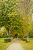 Golden autumn nature Royalty Free Stock Photo