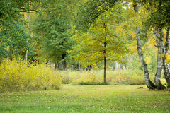 Golden autumn nature Stock Photo