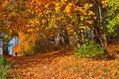 Golden Autumn Park Stock Images