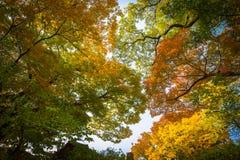 Golden autumn in the park stock photo