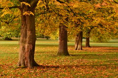 Golden autumn park Stock Photography