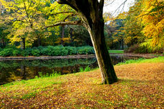 Golden autumn in the park Royalty Free Stock Images