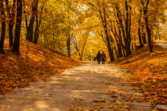 Golden autumn in park Royalty Free Stock Photo