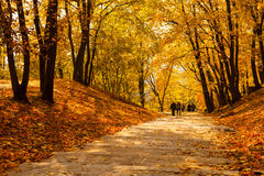 Golden autumn in park Royalty Free Stock Photos
