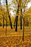 Golden autumn in the Park in St. Petersburg royalty free stock photos