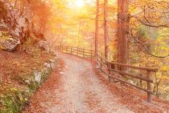 Golden autumn park. Sunrise in mountains Royalty Free Stock Photos
