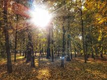 Golden Autumn in the park stock photography