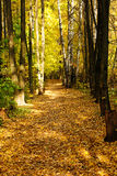 Golden autumn path Royalty Free Stock Image