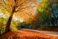 Golden autumn path royalty free stock photography
