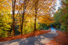 Golden autumn path Royalty Free Stock Images