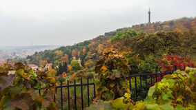 Golden autumn in Prague. Petrin hill in the Czech Republic Royalty Free Stock Images
