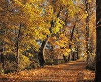 Golden autumn Stock Images