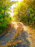 Golden autumn . Road royalty free stock image