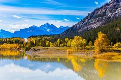 Golden Autumn in the Rockies. Golden Autumn in the Canadian Rockies. The smooth water of the artificial Abraham lake reflects the golden foliage of aspen and royalty free stock photos