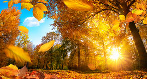 Golden autumn scene with falling leaves royalty free stock photo