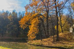 Golden autumn scene in the park with falling leaves. Golden aun scene in the park with falling leaves and pond stock photo