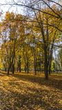 Golden autumn scene in a park, with leaves, sun shining through the trees and blue sky. Autumn forest landscape. Outdoor autumn co. Ncept. Beautiful autumn park stock photo