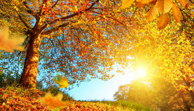 Golden autumn scenery with lots of sunshine Royalty Free Stock Photography
