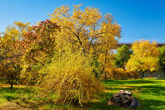The golden autumn scenery Stock Images
