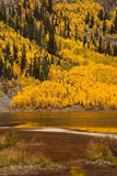 Golden Autumn Scenic Royalty Free Stock Image
