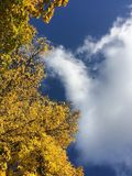 Golden Autumn sky. The golden leaves of the trees shimmers and glitters against on blue sky background. Combination of yellow and blue royalty free stock photo