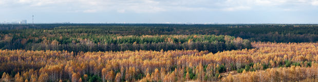 Golden autumn skyline. Autumn landscape in the early morning. Moscow on the horizon, Russia royalty free stock image