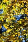 Golden autumn. Royalty Free Stock Photos