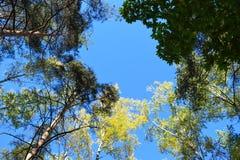 Golden autumn. Stock Image