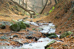 Golden Autumn Stream Stock Image