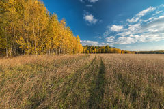 Golden autumn in the suburbs. Stock Photos