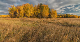 Golden autumn in the suburbs. Royalty Free Stock Image
