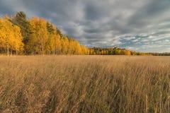 Golden autumn in the suburbs. Stock Photography