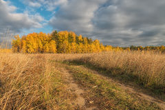 Golden autumn in the suburbs. Royalty Free Stock Photography