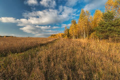Golden autumn in the suburbs. Stock Images