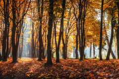 Golden autumn. The sun's rays pass through trees in the park. Stock Photo
