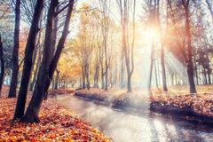 Golden autumn. The sun's rays pass through trees in the park. Royalty Free Stock Image