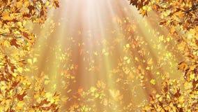 Golden Autumn stock footage