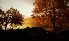 Golden Autumn Sunrise in the Foggy Marsh royalty free stock photo