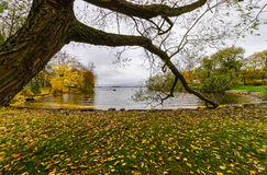 Golden Autumn. Tampere, Finland. Picture taken in Tampere, Finland Stock Photography