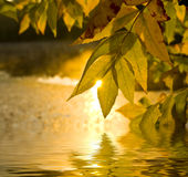 Golden autumn theme Royalty Free Stock Image