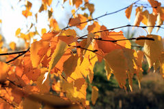 Golden autumn Stock Photography