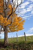 Golden Autumn Tree And Sky Royalty Free Stock Photos