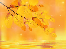 Golden autumn. Tree branch over the water Royalty Free Stock Images